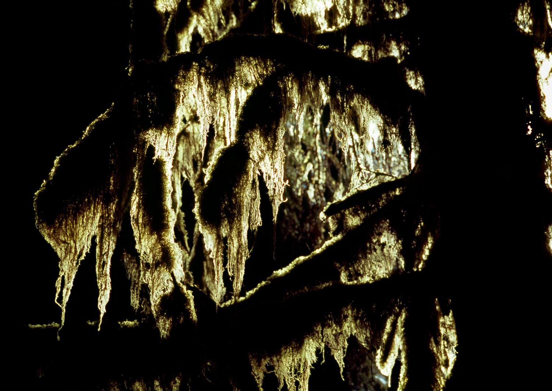 Illuminated Cat-Tail Moss no. 4