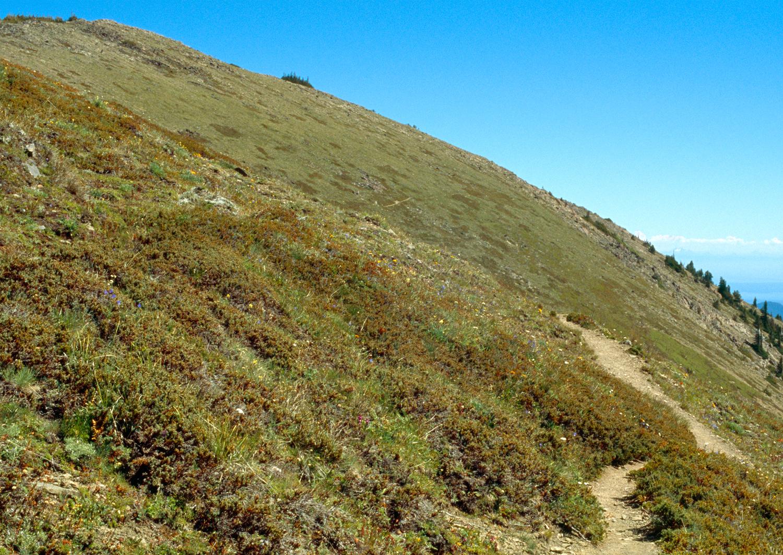 Maiden Peak no. 1