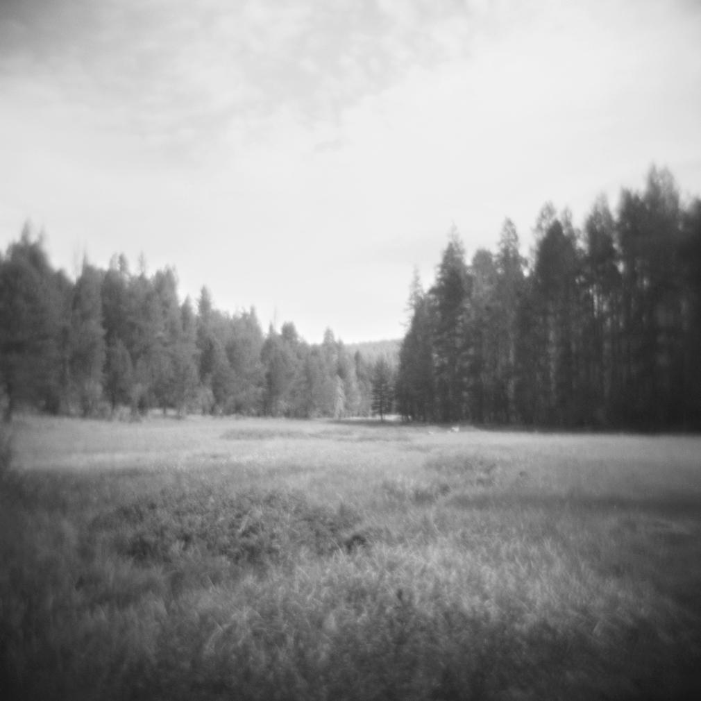 McGurk Meadow no. 1