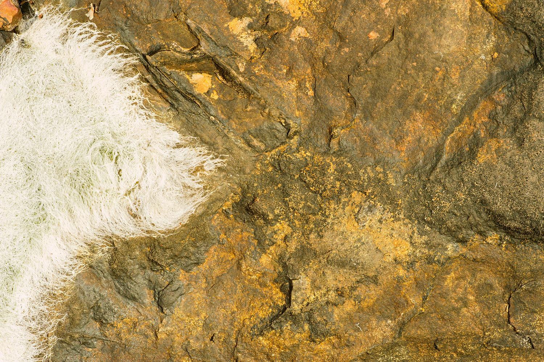 White Fruticose Lichen