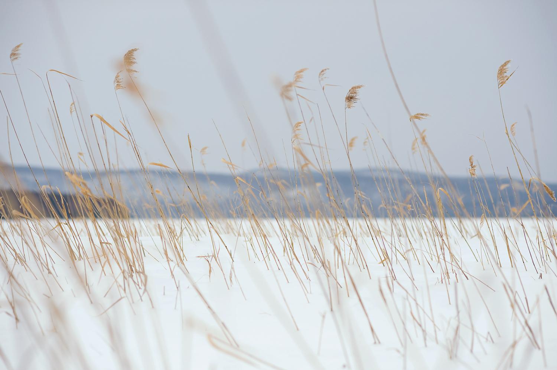 North-East-Bank-no.-3---Neeseponset-Pond-Area,-Quabbin-Reservoir.jpg