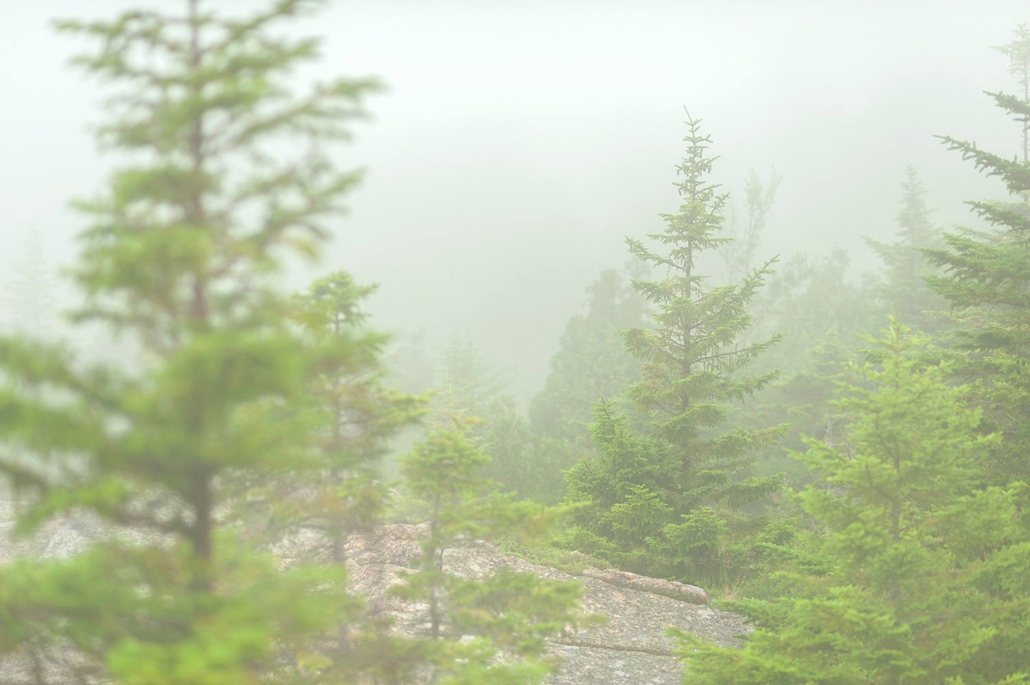 Forest Edge - Pemetic Mountain Trail