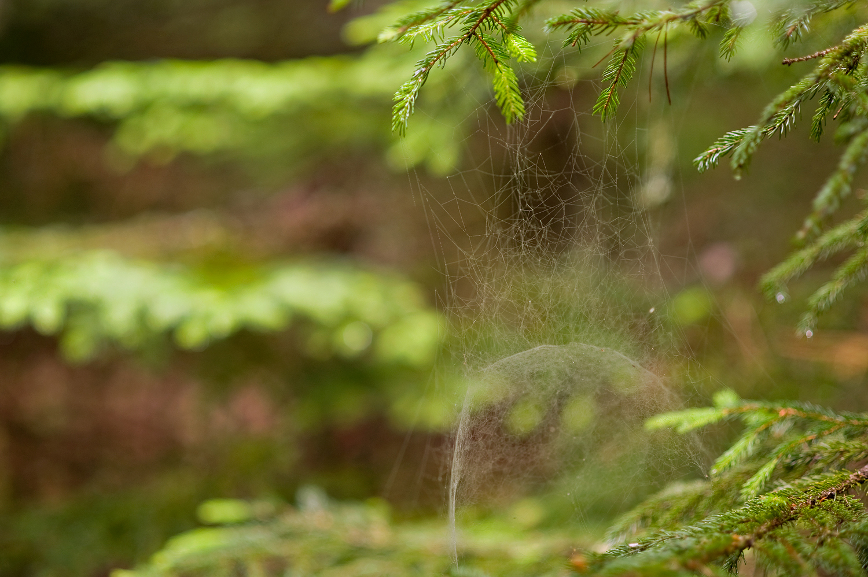 Organic Renderings - St Sauveur Trail