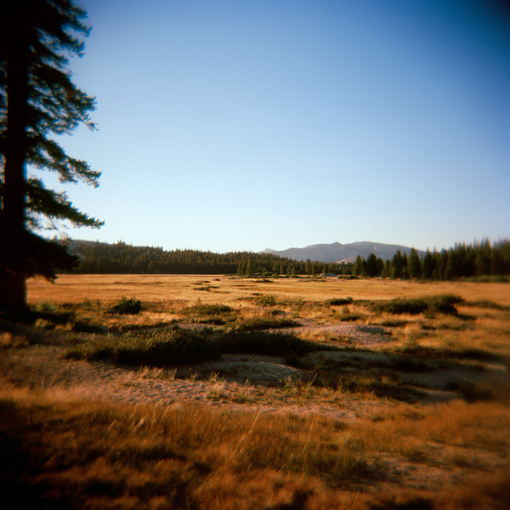Tuolumne Meadows no. 1