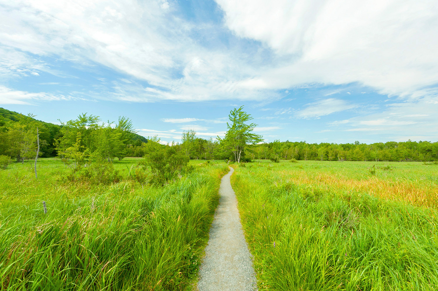 Great Meadow - Jesup Path