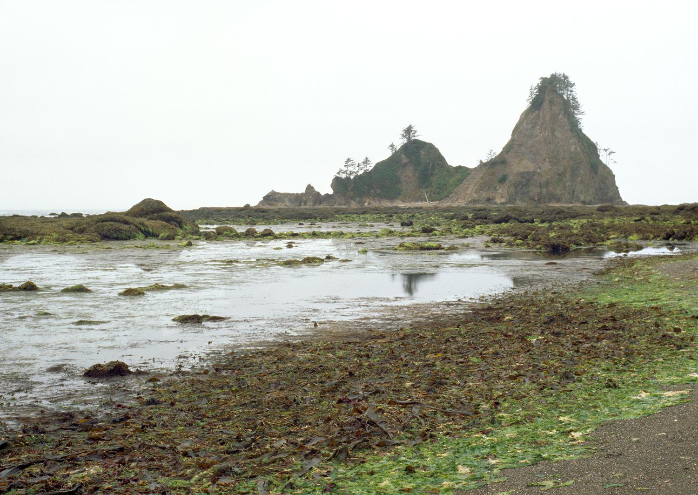 Sea Lettuce & Distant Sea Stacks