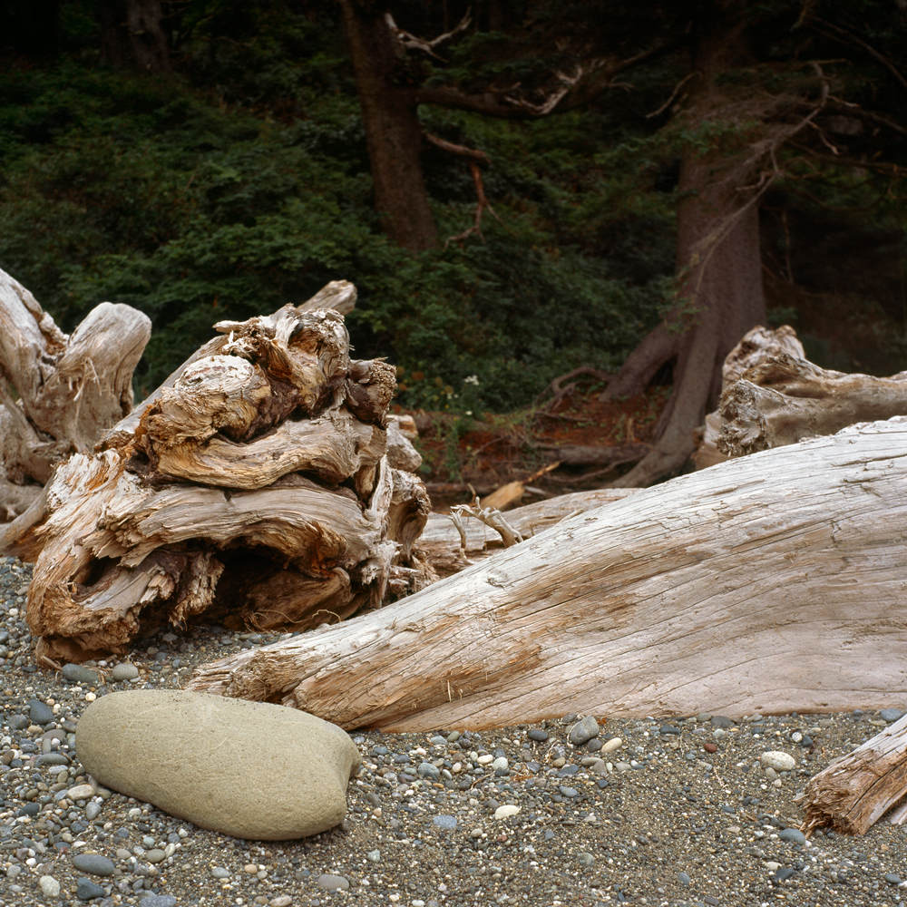 Twisted Driftwood