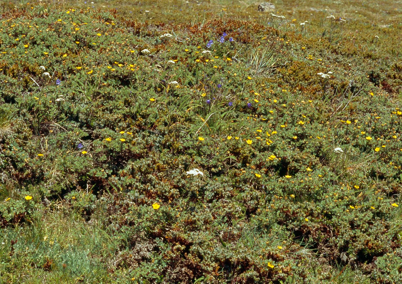 Wildflowers no. 1