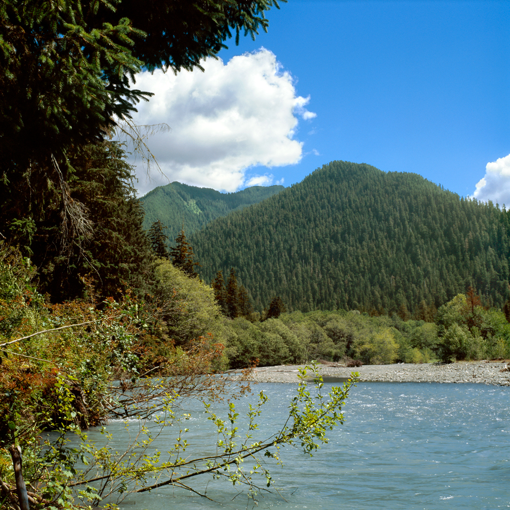 The Hoh River no. 4