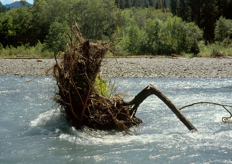 The Hoh River no. 5