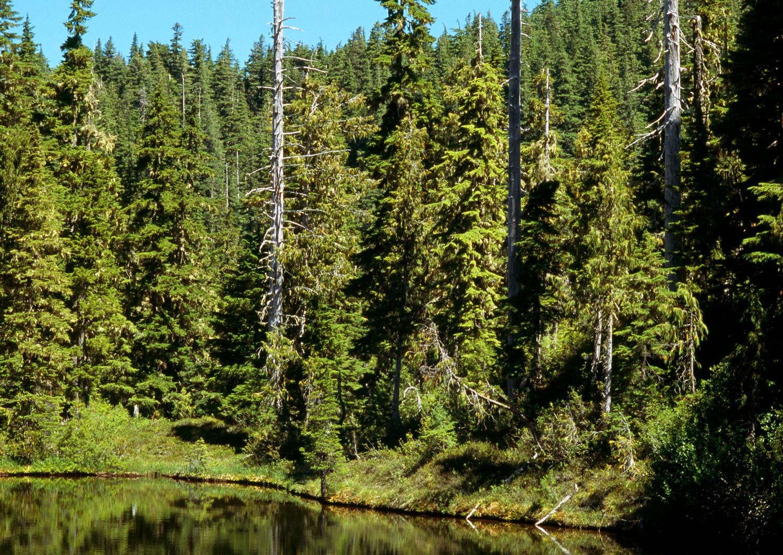Snowmelt Pond no. 2