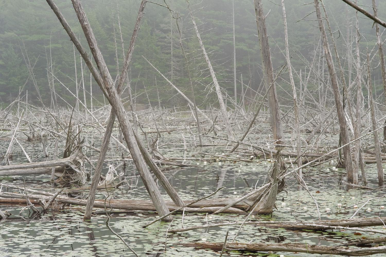 Beaver Ponds no. 3 - Carriage Road