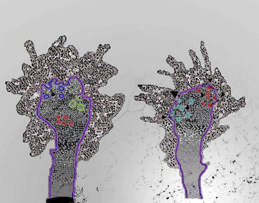 Neuroscions-16.jpg