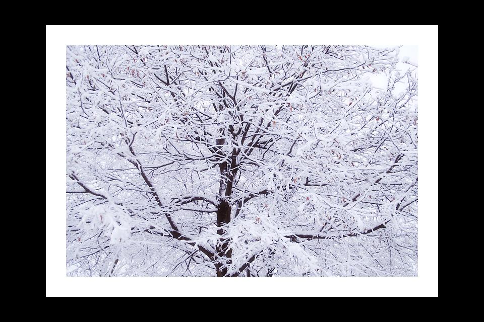 031-SNOWBRANCHES-960x640H-.jpg