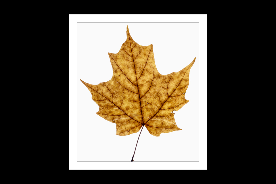 autumn-leaf-v2-editing-5.1-layers-960x640h-.jpg