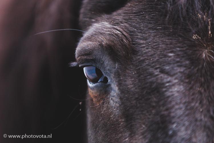 fotograaf_paarden_publicatie_ros_magazine_paardenfotografie_reportage_oud_paard_gelderland_1.jpg