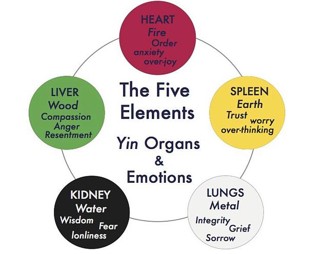 organ time chart